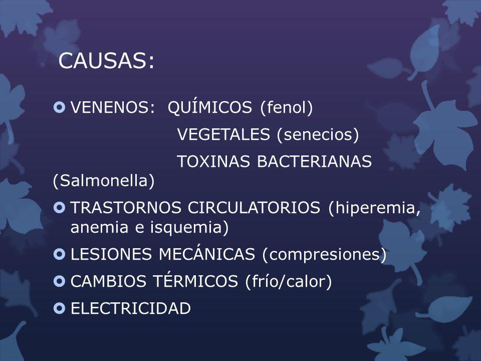 CAUSAS: VENENOS: QUÍMICOS (fenol) VEGETALES (senecios) TOXINAS BACTERIANAS (Salmonella) TRASTORNOS CIRCULATORIOS (hiperemia, anemia e isquemia) LESION