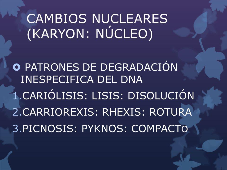 NECROSIS GRASA DESCRIBE UN ASPECTO DE ÁREAS DE DESTRUCCIÓN GRASA DEBIDO A PROCESOS ENZIMÁTICOS (SAPONIFICACION DE LAS GRASAS), DIETÉTICOS DISMETABÓLICOS TRAUMÁTICOS Y CIRCULATORIOS.