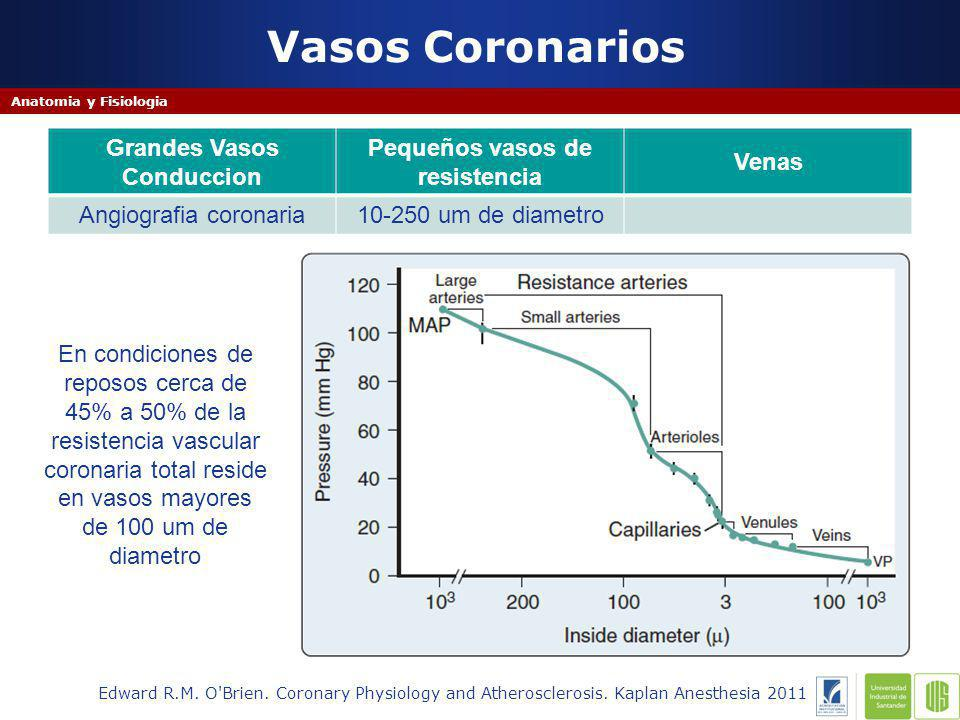 Vasos Coronarios Grandes Vasos Conduccion Pequeños vasos de resistencia Venas Angiografia coronaria10-250 um de diametro Edward R.M.