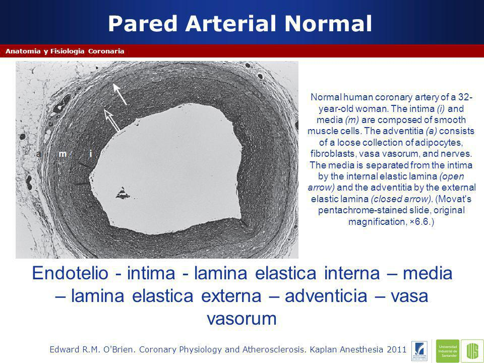 Pared Arterial Normal Edward R.M.O Brien. Coronary Physiology and Atherosclerosis.