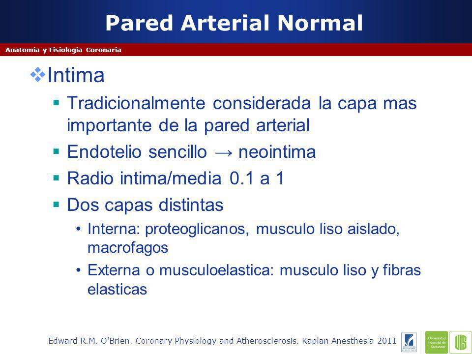 Pared Arterial Normal Edward R.M. O'Brien. Coronary Physiology and Atherosclerosis. Kaplan Anesthesia 2011 Anatomia y Fisiologia Coronaria Intima Trad