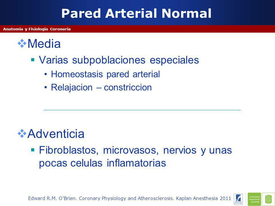 Pared Arterial Normal Edward R.M. O'Brien. Coronary Physiology and Atherosclerosis. Kaplan Anesthesia 2011 Anatomia y Fisiologia Coronaria Media Varia