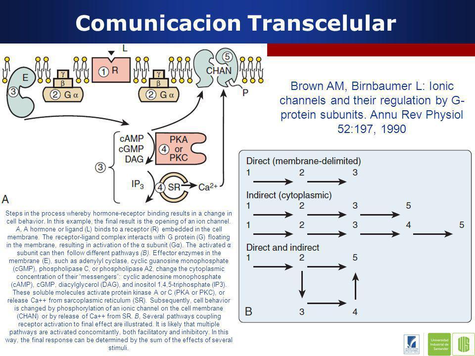 Comunicacion Transcelular Anatomia y Fisiologia Coronaria Receptor B Estimula G s AMPc Receptor muscarinico Activa G i AMPc Vasopresina Activa fosfolipasa C IP 3 : Ca DAG: Activa PKC Apertura canales ionicos, contraccion o relajacion musculo liso, actividad secretora, division celular Edward R.M.