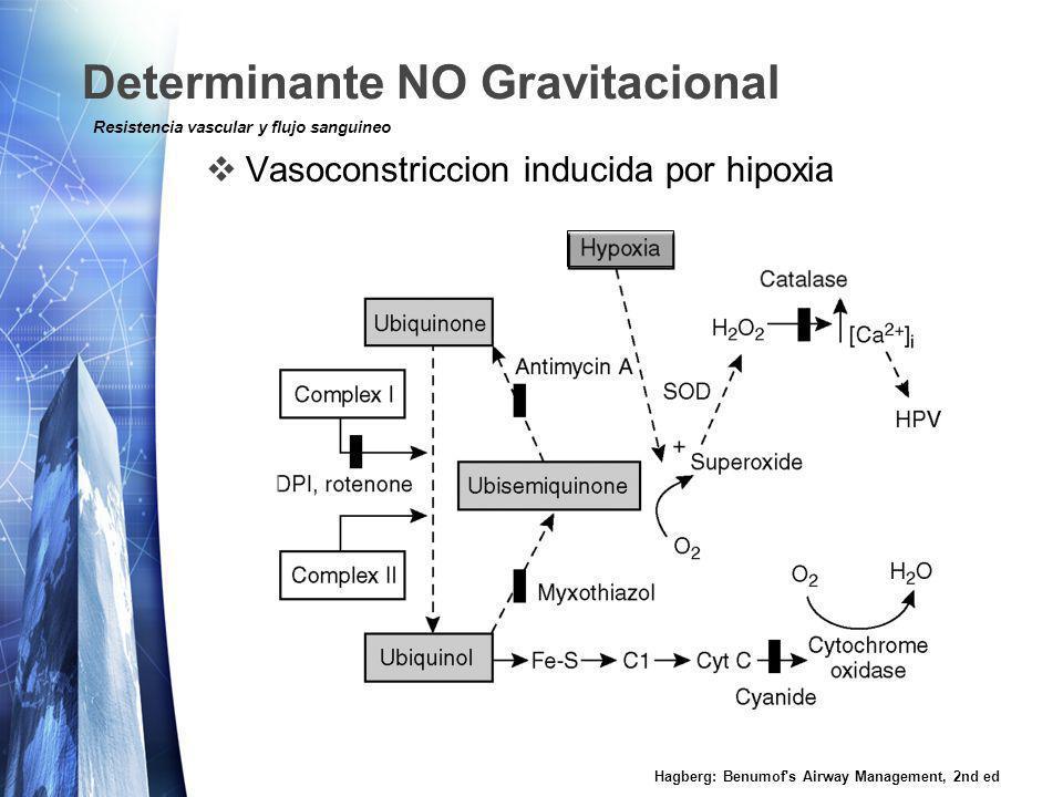 Determinante NO Gravitacional Vasoconstriccion inducida por hipoxia Hagberg: Benumof s Airway Management, 2nd ed Resistencia vascular y flujo sanguineo