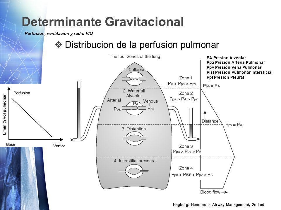 Determinante Gravitacional Distribucion de la perfusion pulmonar Hagberg: Benumof s Airway Management, 2nd ed Perfusion, ventilacion y radio V/Q PA Presion Alveolar Ppa Presion Arteria Pulmonar Ppv Presion Vena Pulmonar Pisf Presion Pulmonar Intersticial Ppl Presion Pleural