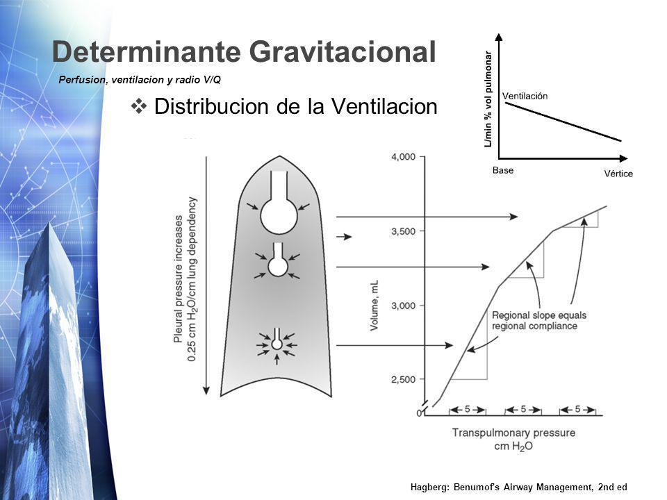Determinante Gravitacional Distribucion de la Ventilacion Hagberg: Benumof s Airway Management, 2nd ed Perfusion, ventilacion y radio V/Q