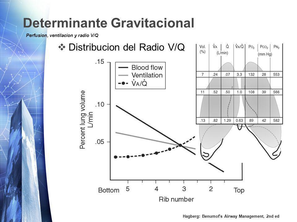 Determinante Gravitacional Distribucion del Radio V/Q Hagberg: Benumof s Airway Management, 2nd ed Perfusion, ventilacion y radio V/Q
