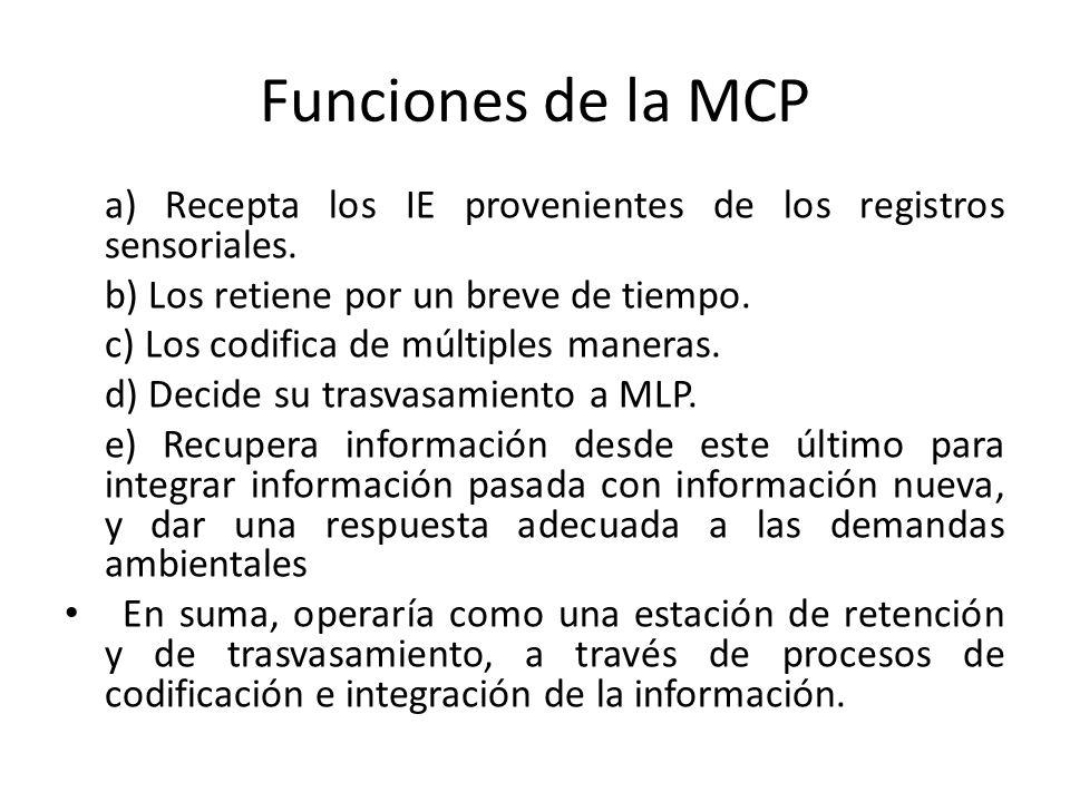 Funciones de la MCP a) Recepta los IE provenientes de los registros sensoriales. b) Los retiene por un breve de tiempo. c) Los codifica de múltiples m