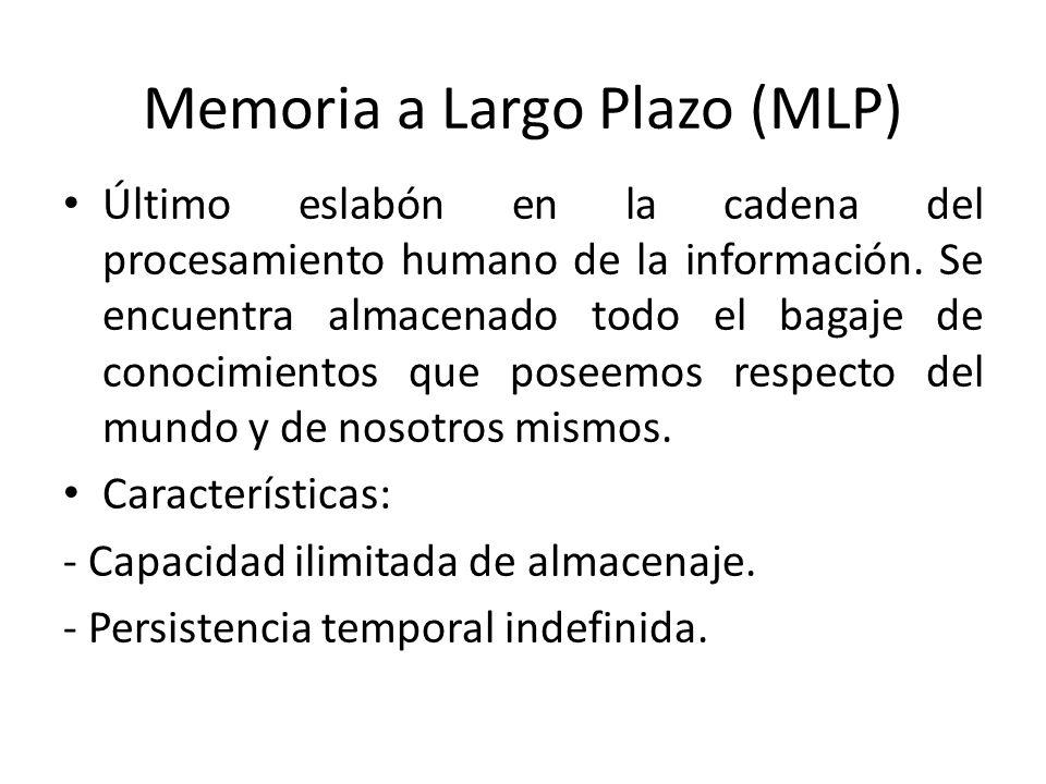Memoria a Largo Plazo (MLP) Último eslabón en la cadena del procesamiento humano de la información. Se encuentra almacenado todo el bagaje de conocimi