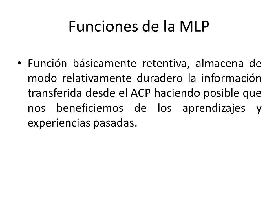 Funciones de la MLP Función básicamente retentiva, almacena de modo relativamente duradero la información transferida desde el ACP haciendo posible qu