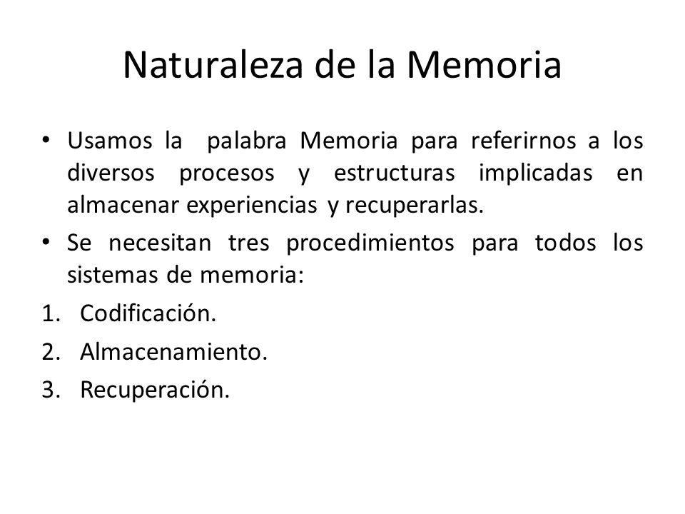 Naturaleza de la Memoria Usamos la palabra Memoria para referirnos a los diversos procesos y estructuras implicadas en almacenar experiencias y recupe