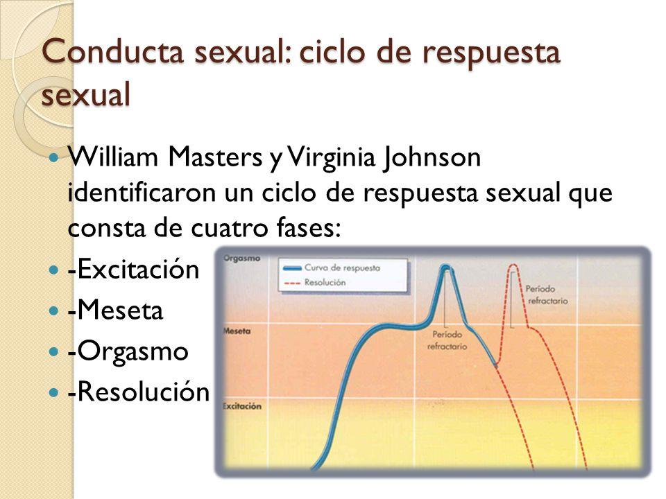 Conducta sexual: ciclo de respuesta sexual William Masters y Virginia Johnson identificaron un ciclo de respuesta sexual que consta de cuatro fases: -