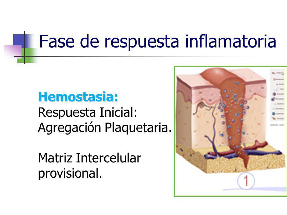 Fase de respuesta inflamatoria Hemostasia: Respuesta Inicial: Agregación Plaquetaria. Matriz Intercelular provisional.