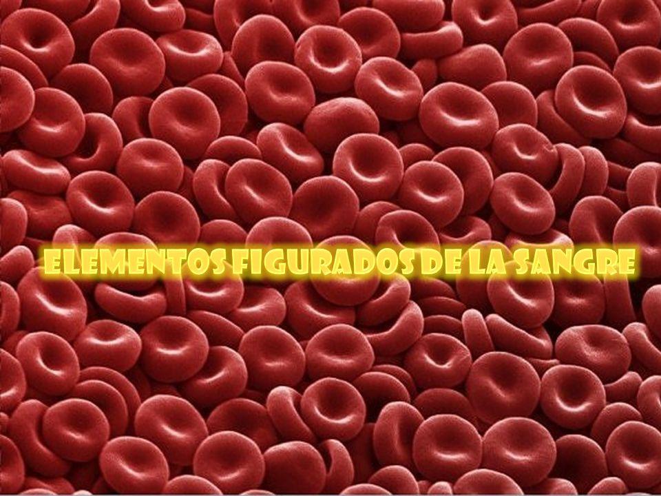 Su matriz es liquida compuesta por: Sustancia intracelular; Plasma sanguíneo constituido por: Agua, proteínas plasmáticas (albumina y globulina), Electrolitos ( K+, Na+, Ca+, Mg+) Elementos figurados: hematíes, leucocitos, plaquetas (tromboplastos)