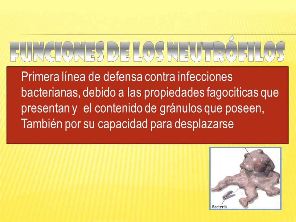 Primera línea de defensa contra infecciones bacterianas, debido a las propiedades fagociticas que presentan y el contenido de gránulos que poseen, También por su capacidad para desplazarse