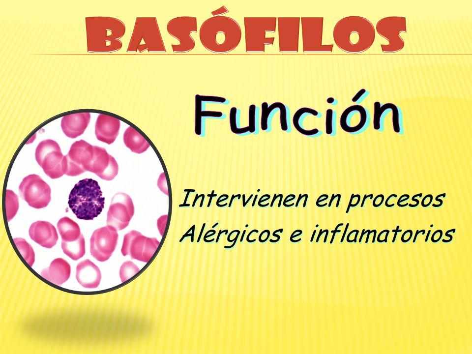 Intervienen en procesos Alérgicos e inflamatorios Intervienen en procesos Alérgicos e inflamatorios