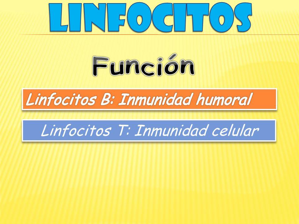 Linfocitos T: Inmunidad celular