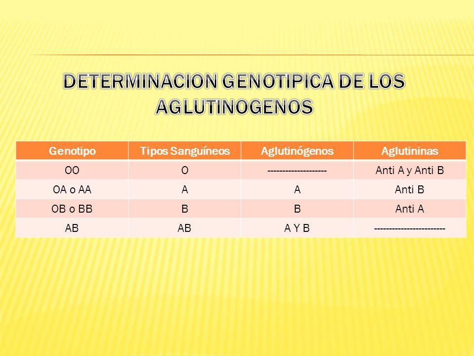 GenotipoTipos SanguíneosAglutinógenosAglutininas OOO--------------------Anti A y Anti B OA o AAAAAnti B OB o BBBBAnti A AB A Y B------------------------
