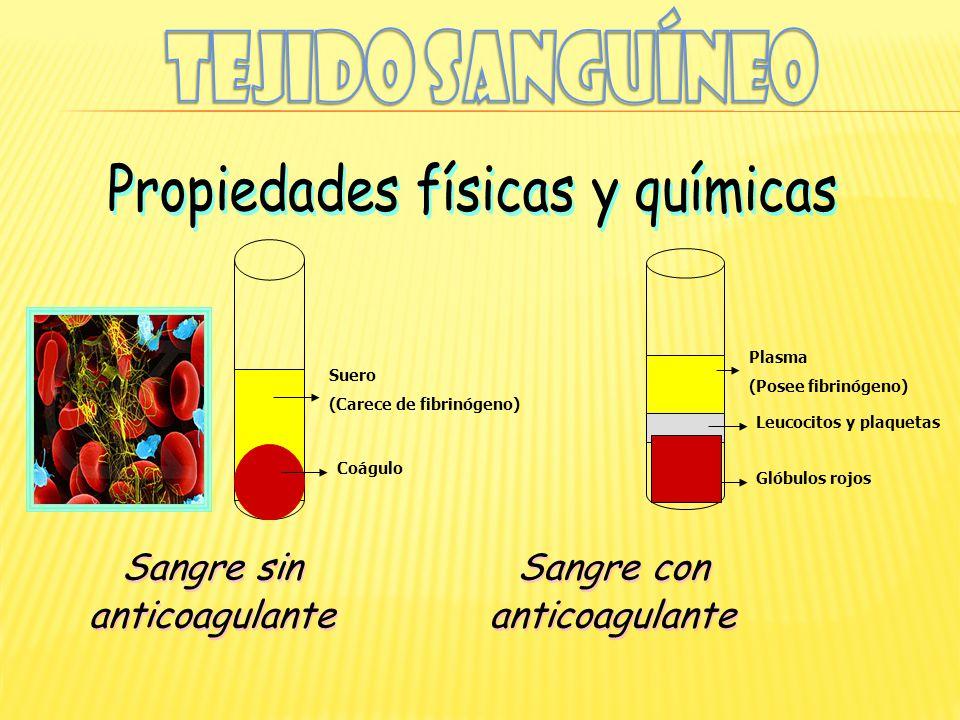 Suero (Carece de fibrinógeno) Coágulo Plasma (Posee fibrinógeno) Leucocitos y plaquetas Glóbulos rojos Sangre sin anticoagulante Sangre sin anticoagul