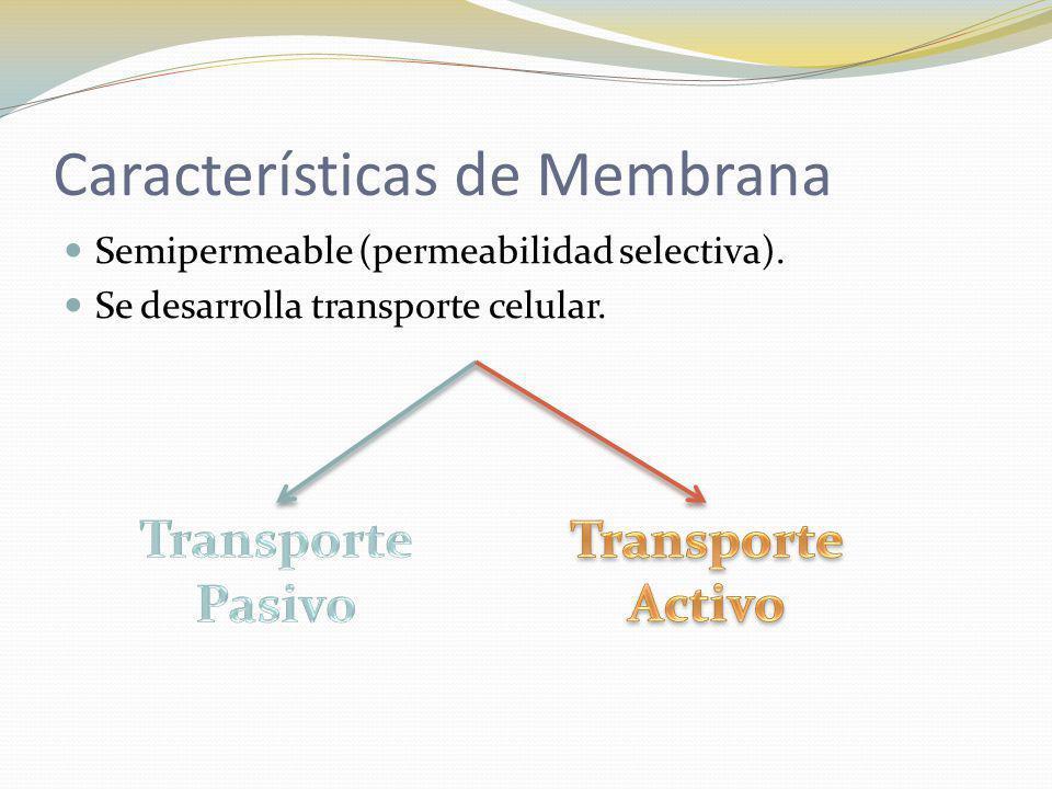 Características de Membrana Semipermeable (permeabilidad selectiva). Se desarrolla transporte celular.