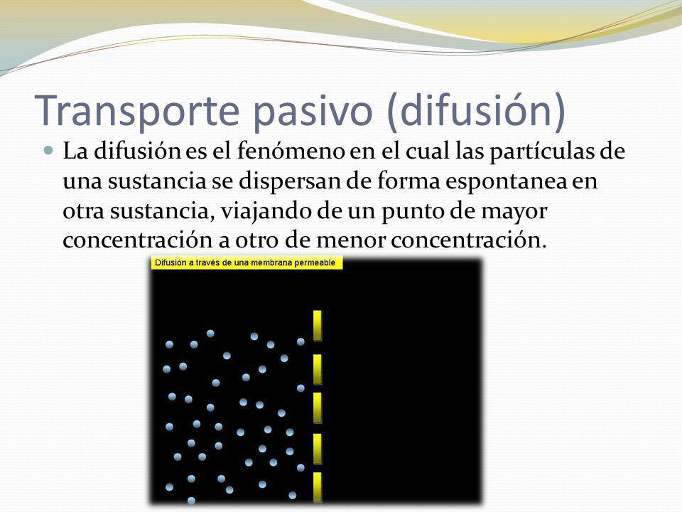 Transporte pasivo (difusión) La difusión es el fenómeno en el cual las partículas de una sustancia se dispersan de forma espontanea en otra sustancia,