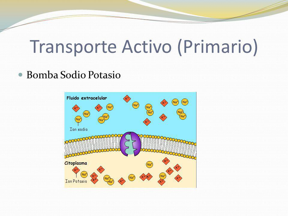 Transporte Activo (Primario) Bomba Sodio Potasio