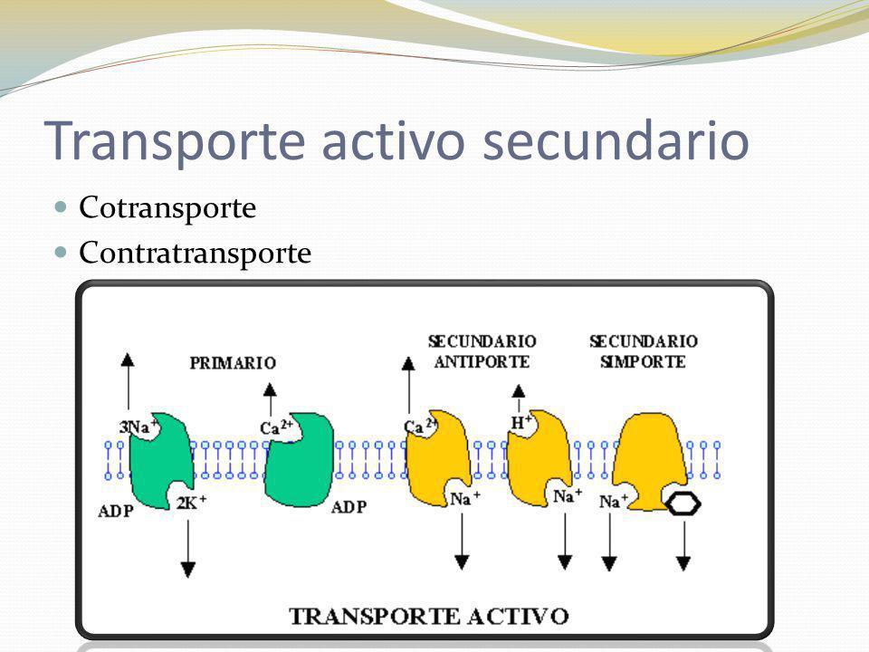 Transporte activo secundario Cotransporte Contratransporte