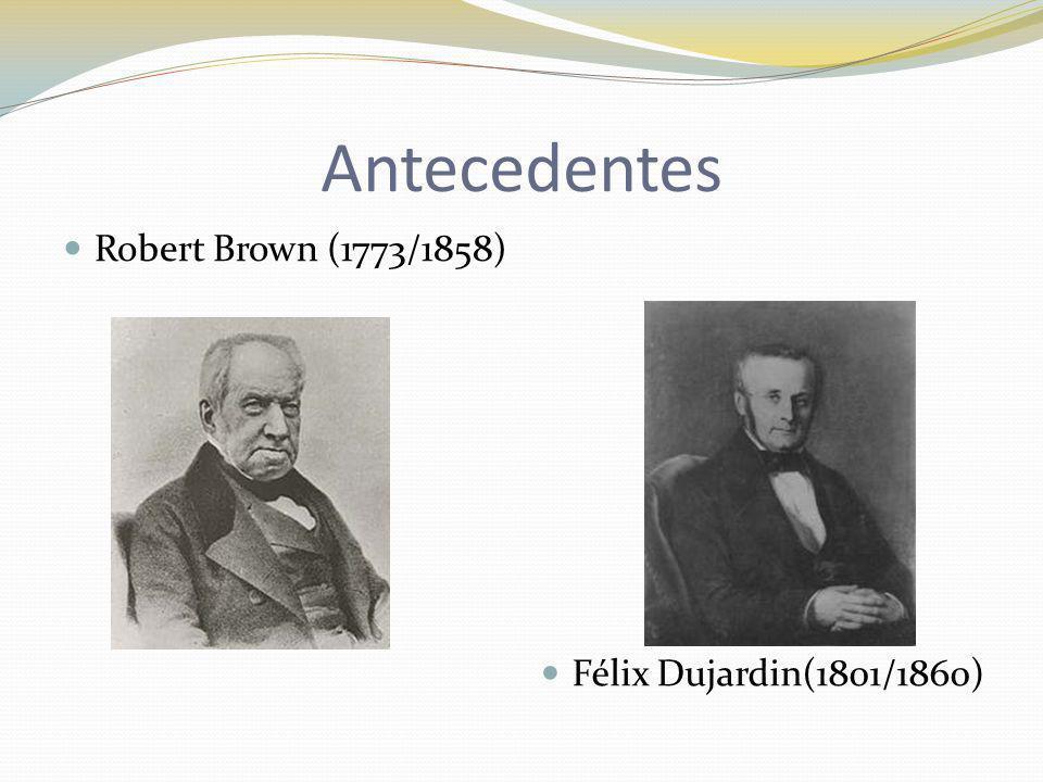 Antecedentes Robert Brown (1773/1858) Félix Dujardin(1801/1860)