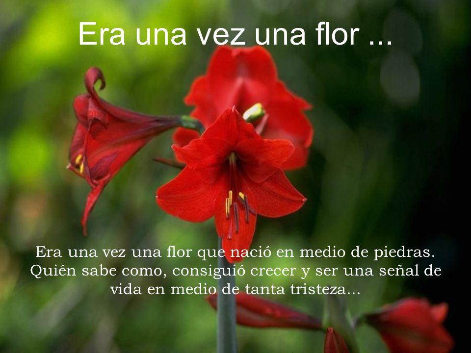 Pasó una joven y quedó admirada con la flor.Luego pensó en Dios.