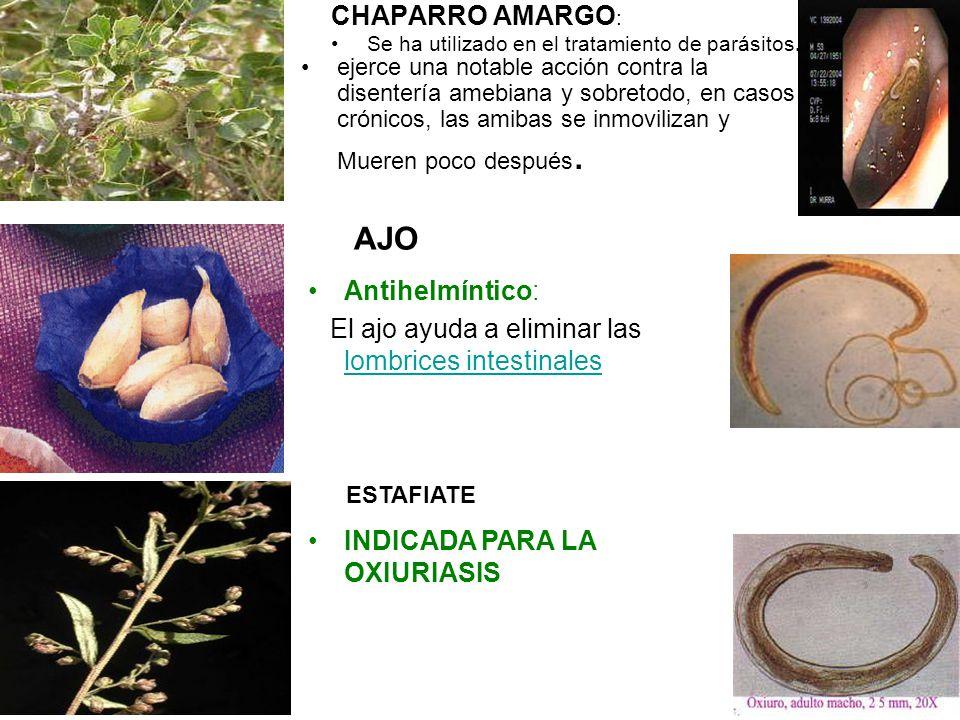 CHAPARRO AMARGO : Se ha utilizado en el tratamiento de parásitos. ejerce una notable acción contra la disentería amebiana y sobretodo, en casos crónic
