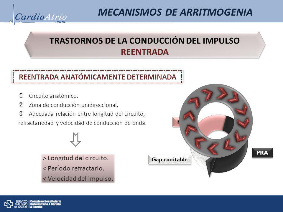 MECANISMOS DE ARRITMOGENIA TRASTORNOS DE LA CONDUCCIÓN DEL IMPULSO REENTRADA REENTRADA ANATÓMICAMENTE DETERMINADA PRR Gap excitable Gap excitable PRA