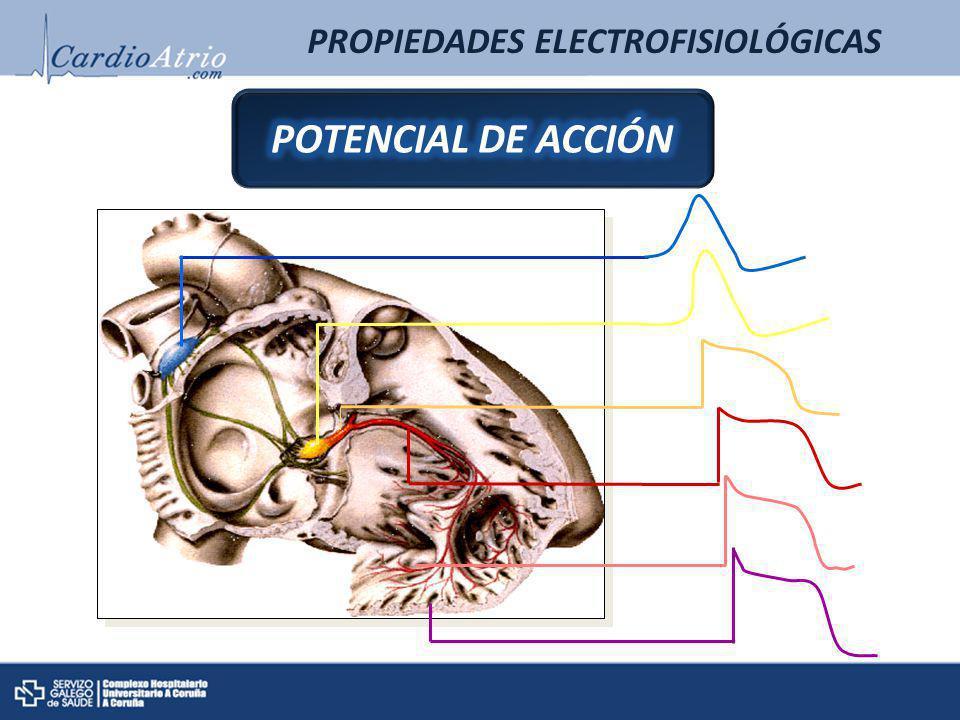 TRASTORNOS DE LA FORMACIÓN DEL IMPULSO AUTOMATISMO TRASTORNOS DE LA FORMACIÓN DEL IMPULSO AUTOMATISMO AUTOMATISMO NORMAL SNS SNP