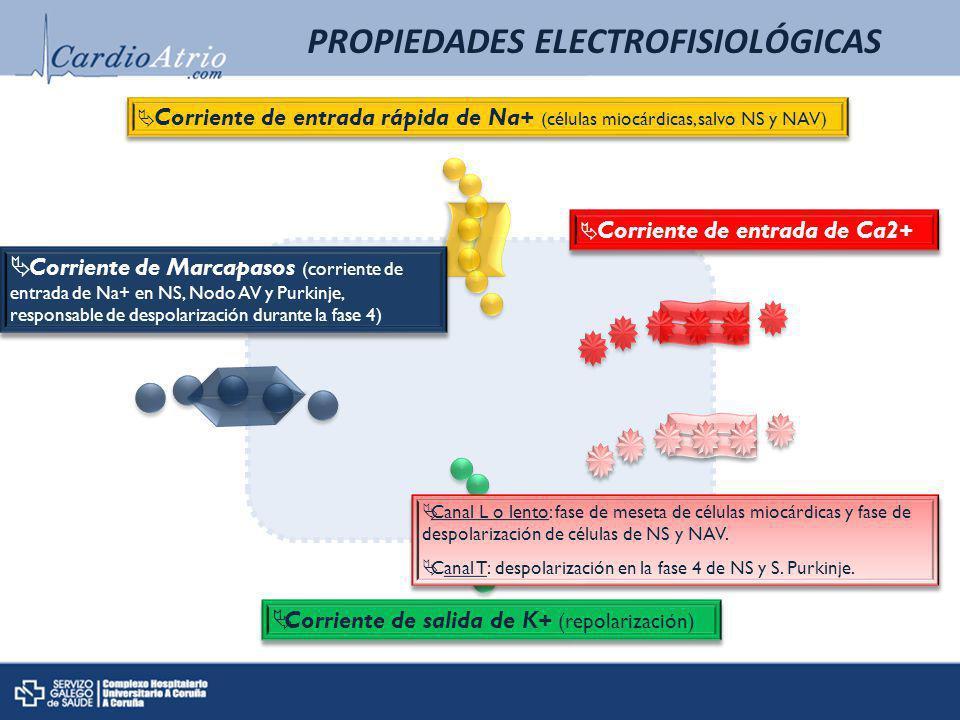 Corriente de salida de K+ (repolarización) Corriente de entrada rápida de Na+ (células miocárdicas, salvo NS y NAV) Corriente de entrada de Ca2+ Corri