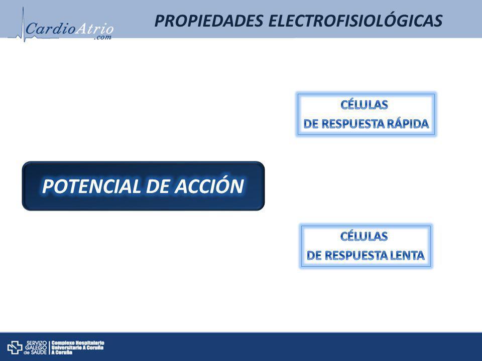 Fase 0: DESPOLARIZACIÓN RÁPIDA Na+ Fase 1: entrada pasiva de Cl- Cl- Ca2+ Fase 2: MESETA Fase 3: REPOLARIZACIÓN Na+ K+ Fase 4: FASE DE REPOSO -90 mV 0 mV PROPIEDADES ELECTROFISIOLÓGICAS