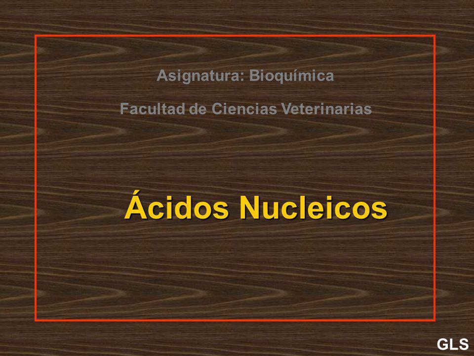 Ácidos Nucleicos GLS Facultad de Ciencias Veterinarias Asignatura: Bioquímica