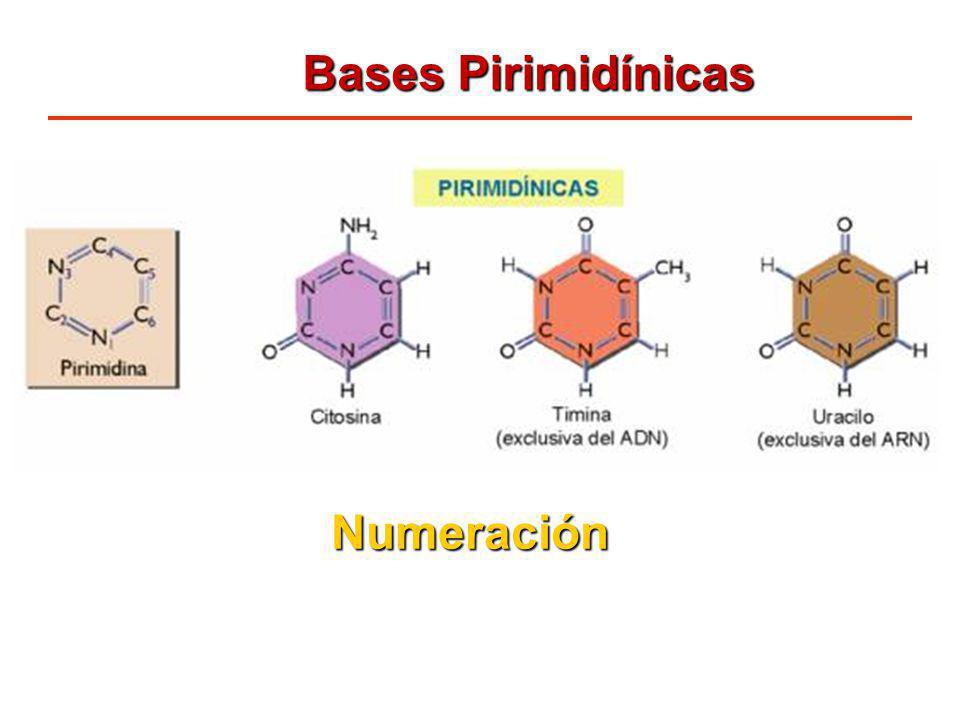 Bases Pirimidínicas Numeración