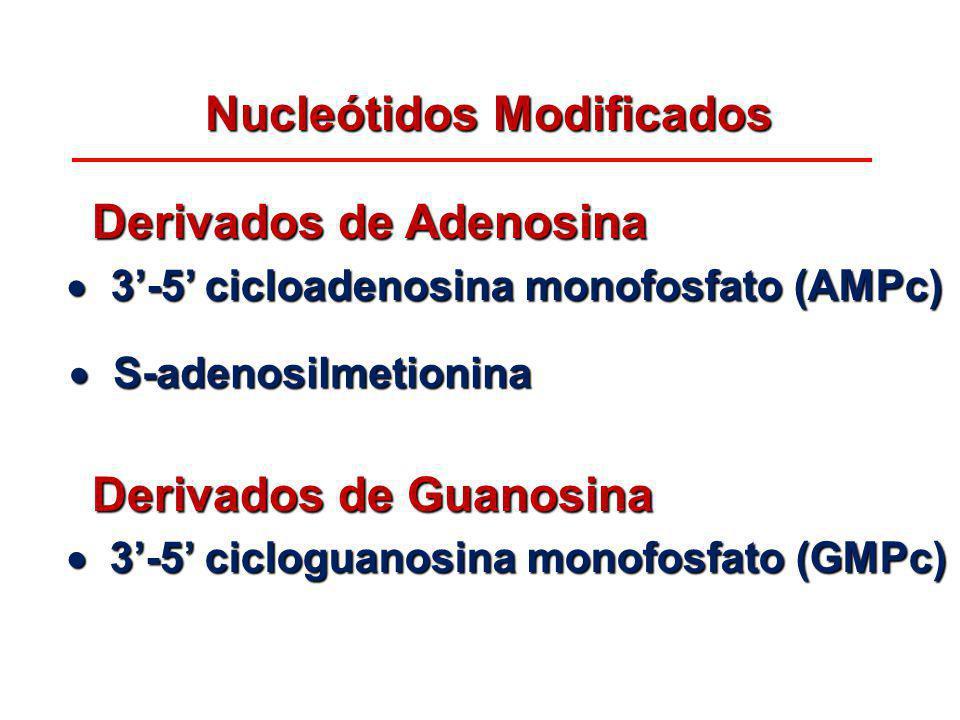 Nucleótidos Modificados Derivados de Adenosina Derivados de Adenosina Derivados de Guanosina Derivados de Guanosina 3-5 cicloadenosina monofosfato (AM