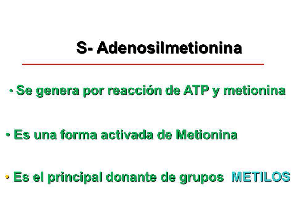 S- Adenosilmetionina S- Adenosilmetionina Es una forma activada de Metionina Es una forma activada de Metionina Se genera por reacción de ATP y metion