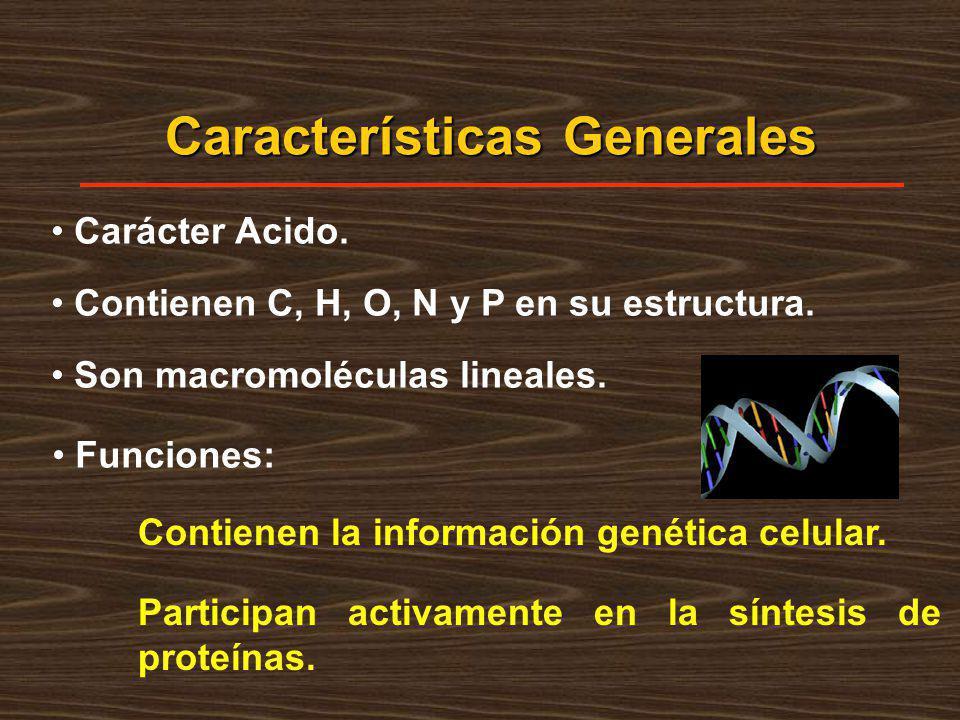 Participan activamente en la síntesis de proteínas. Características Generales Carácter Acido. Contienen C, H, O, N y P en su estructura. Son macromolé