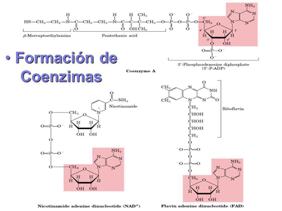 Formación de Coenzimas Formación de Coenzimas