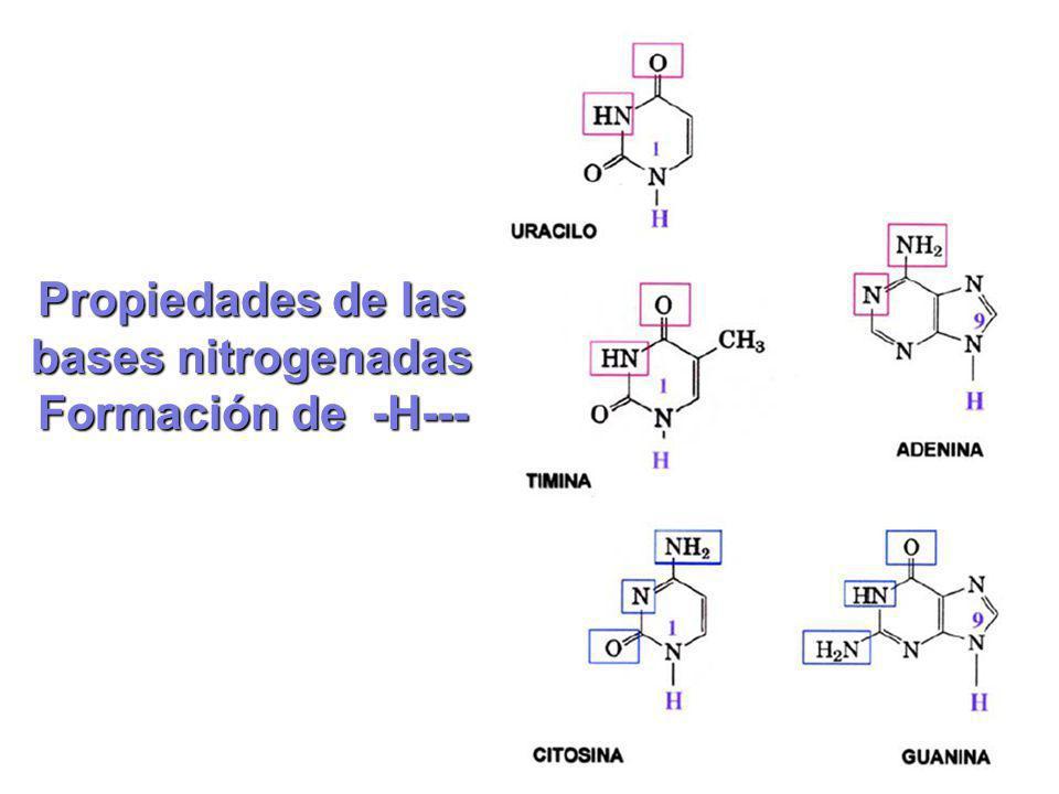 Propiedades de las bases nitrogenadas Formación de -H---