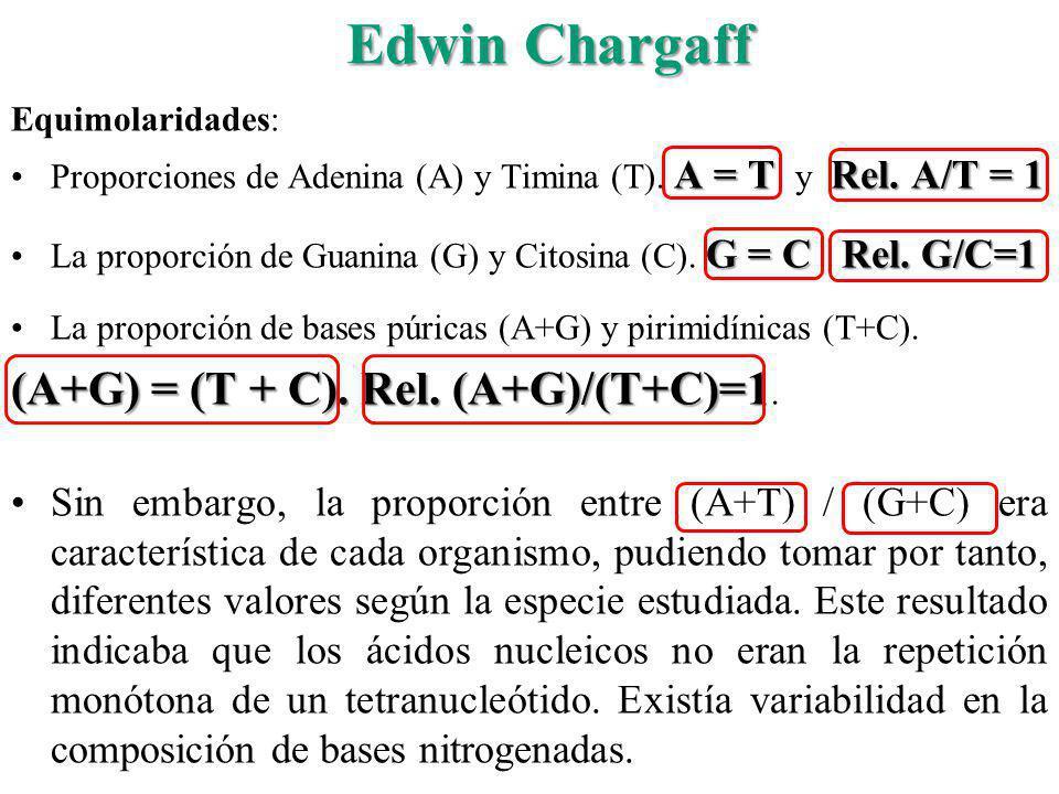 Edwin Chargaff Equimolaridades: A = T Rel. A/T = 1Proporciones de Adenina (A) y Timina (T). A = T y Rel. A/T = 1 G = C Rel. G/C=1La proporción de Guan