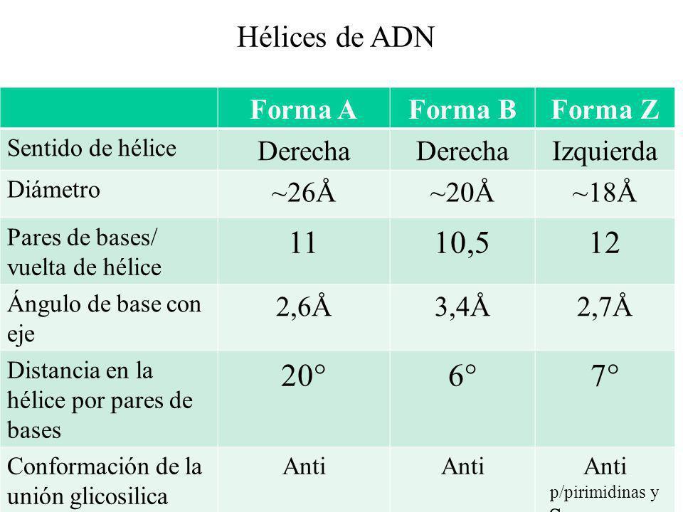 Forma AForma BForma Z Sentido de hélice Derecha Izquierda Diámetro ~26Å~20Å~18Å Pares de bases/ vuelta de hélice 1110,512 Ángulo de base con eje 2,6Å3