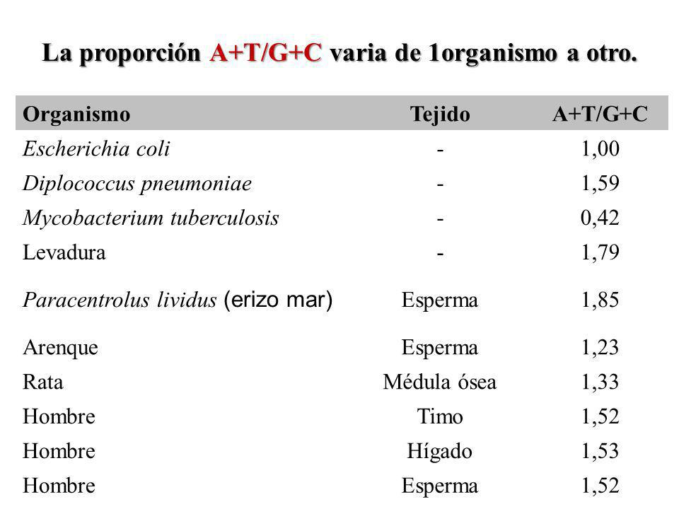 OrganismoTejidoA+T/G+C Escherichia coli-1,00 Diplococcus pneumoniae-1,59 Mycobacterium tuberculosis-0,42 Levadura-1,79 Paracentrolus lividus (erizo ma