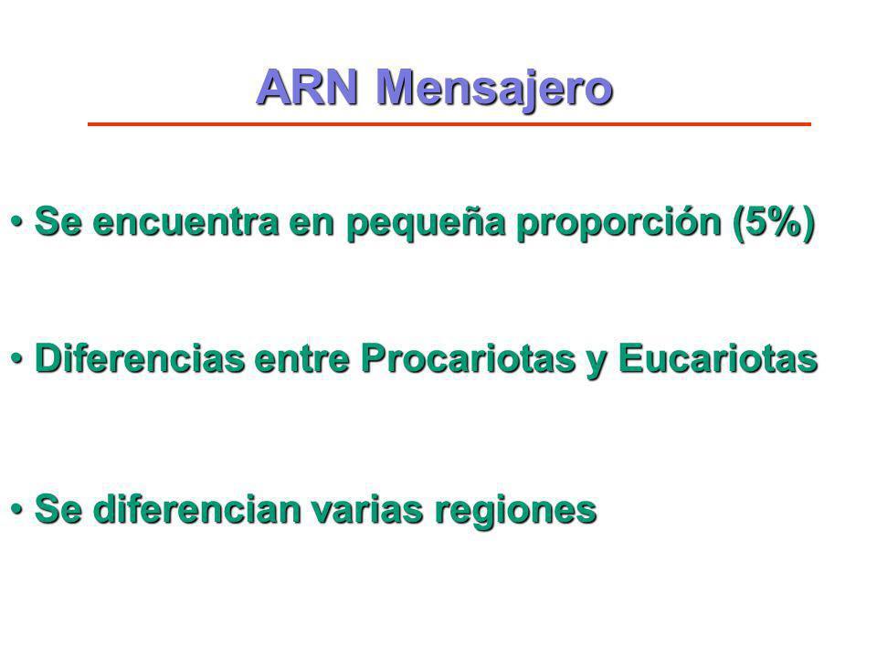 ARN Mensajero Se encuentra en pequeña proporción (5%) Se encuentra en pequeña proporción (5%) Diferencias entre Procariotas y Eucariotas Diferencias e