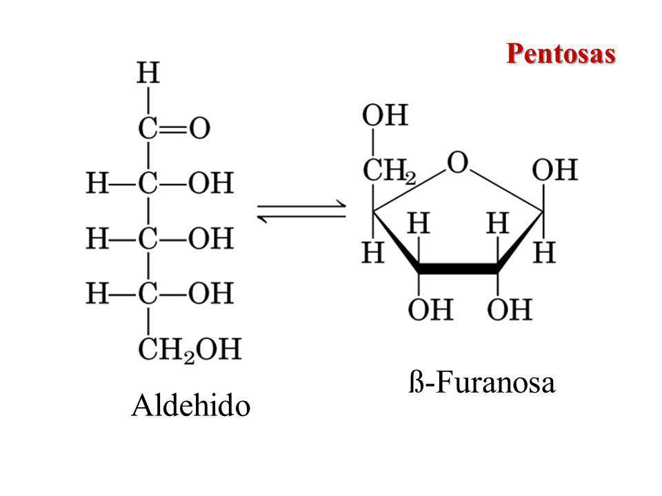 ß-Furanosa Aldehido Pentosas