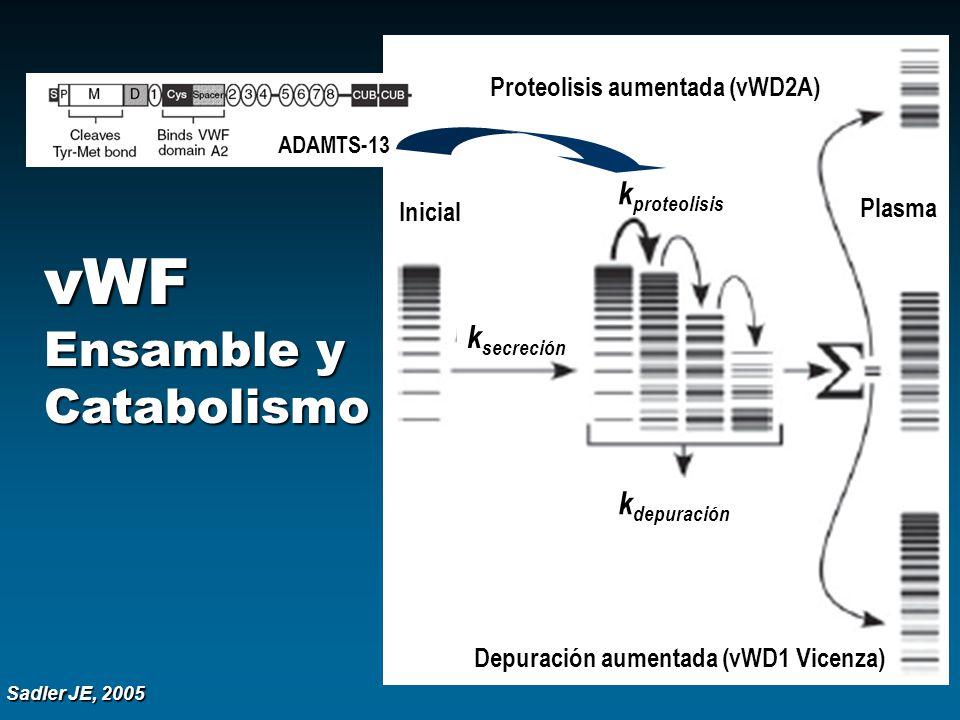 Sadler JE, 2005 vWF Ensamble y Catabolismo Proteolisis aumentada (vWD2A) Depuración aumentada (vWD1 Vicenza) Plasma Inicial k proteolisis k depuración