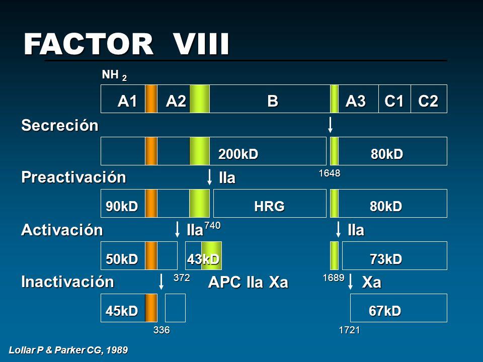IIa A1A2 B A3 C1 C2 200kD 80kD 200kD 80kD 90kD HRG 80kD 50kD 43kD 73kD 45kD 67kD FACTOR VIII NH 2 SecreciónPreactivaciónActivaciónInactivación IIaIIa