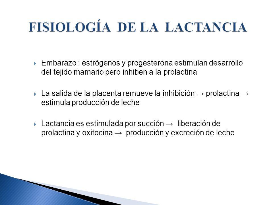 Embarazo : estrógenos y progesterona estimulan desarrollo del tejido mamario pero inhiben a la prolactina La salida de la placenta remueve la inhibici