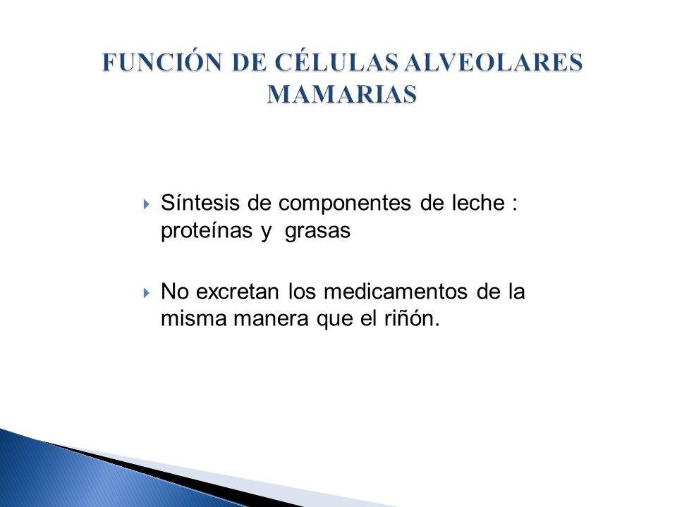 PARACELULAR : 48 – 72 h post- parto Epitelio alveolar en desarrollo Gaps entre células paso de fármacos del fluido intersticial a la leche Volumen calostro da cantidad de fármacos aunque la [ ] está TRANSCELULAR: Se cierran los gaps intercelulares Transferencia de fármacos a través de células alveolares epiteliales Difusión pasiva a través de membranas lipídicas : capilares, células alveolares.